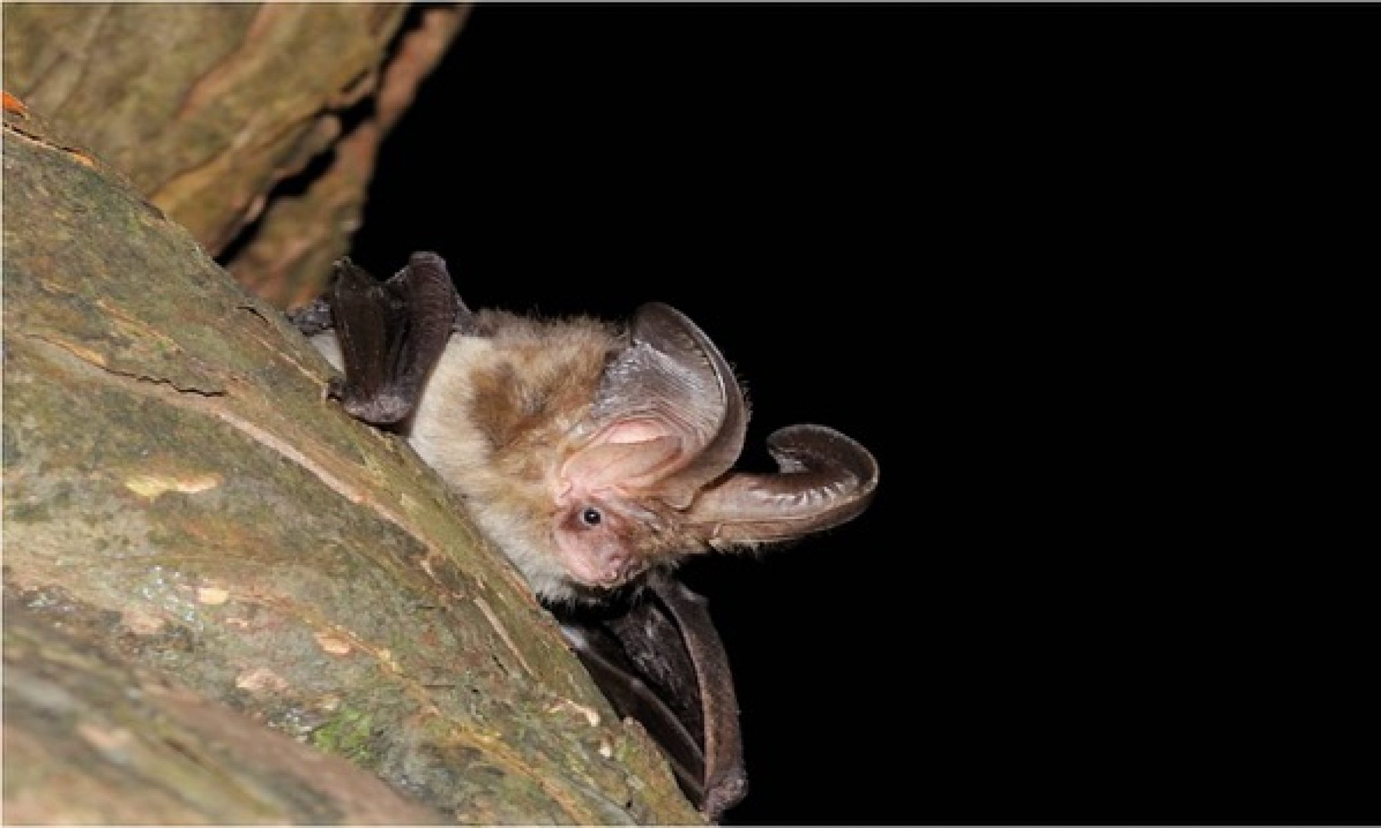 Monmouthshire Bat Group